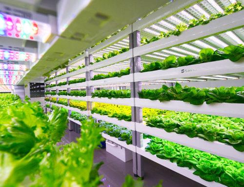 Teknologi Smart Tani Jadikan Bertani Lebih Mudah dan Asik